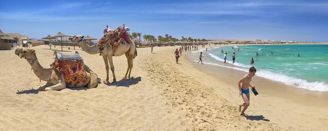 Wielbłąd na plaży w Egipcie