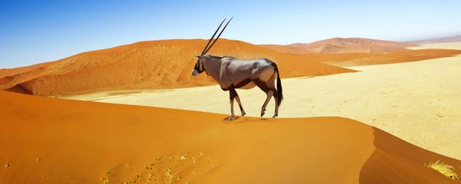 namibia wydmy