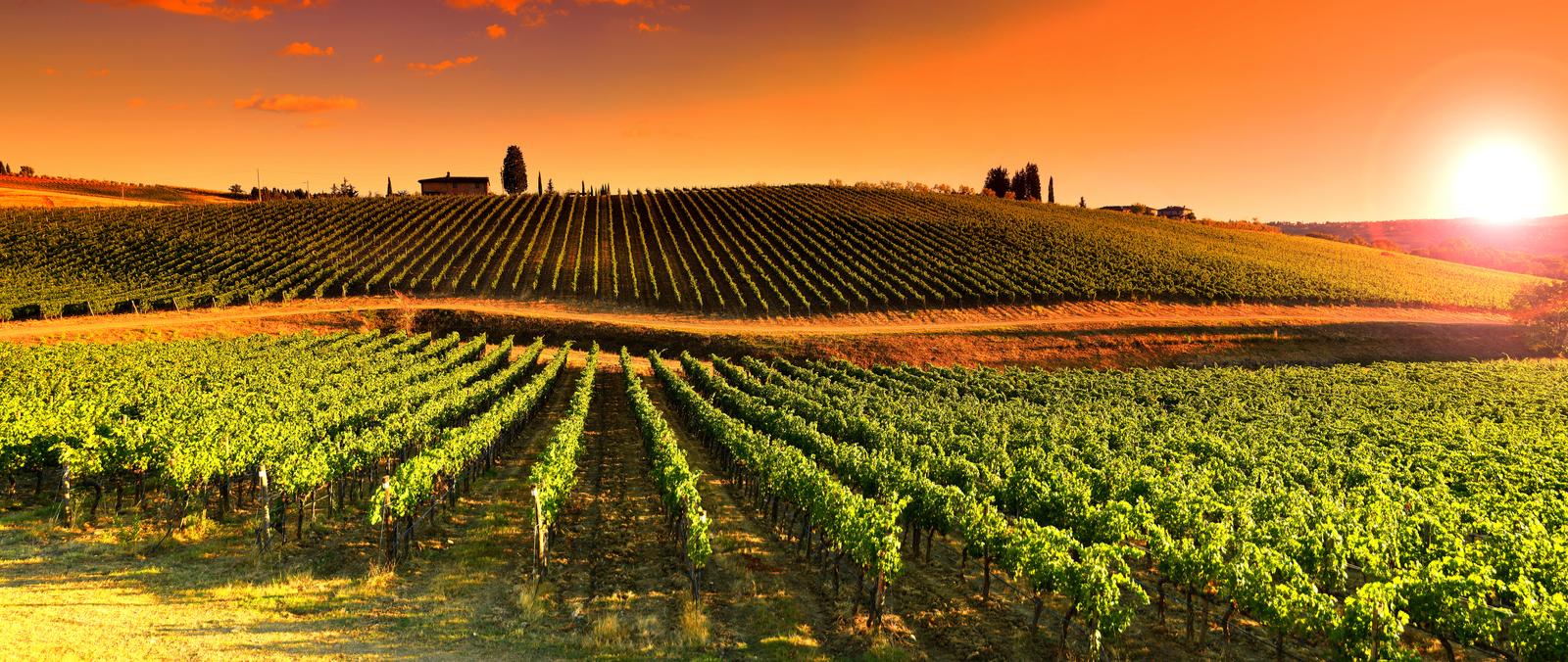 toskania winnica