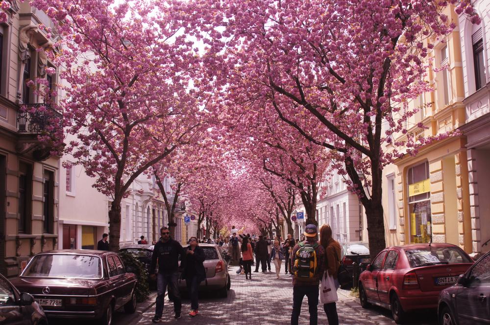 ulica w Bonn