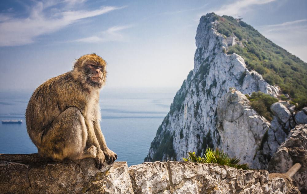 Małpa z Gibraltaru