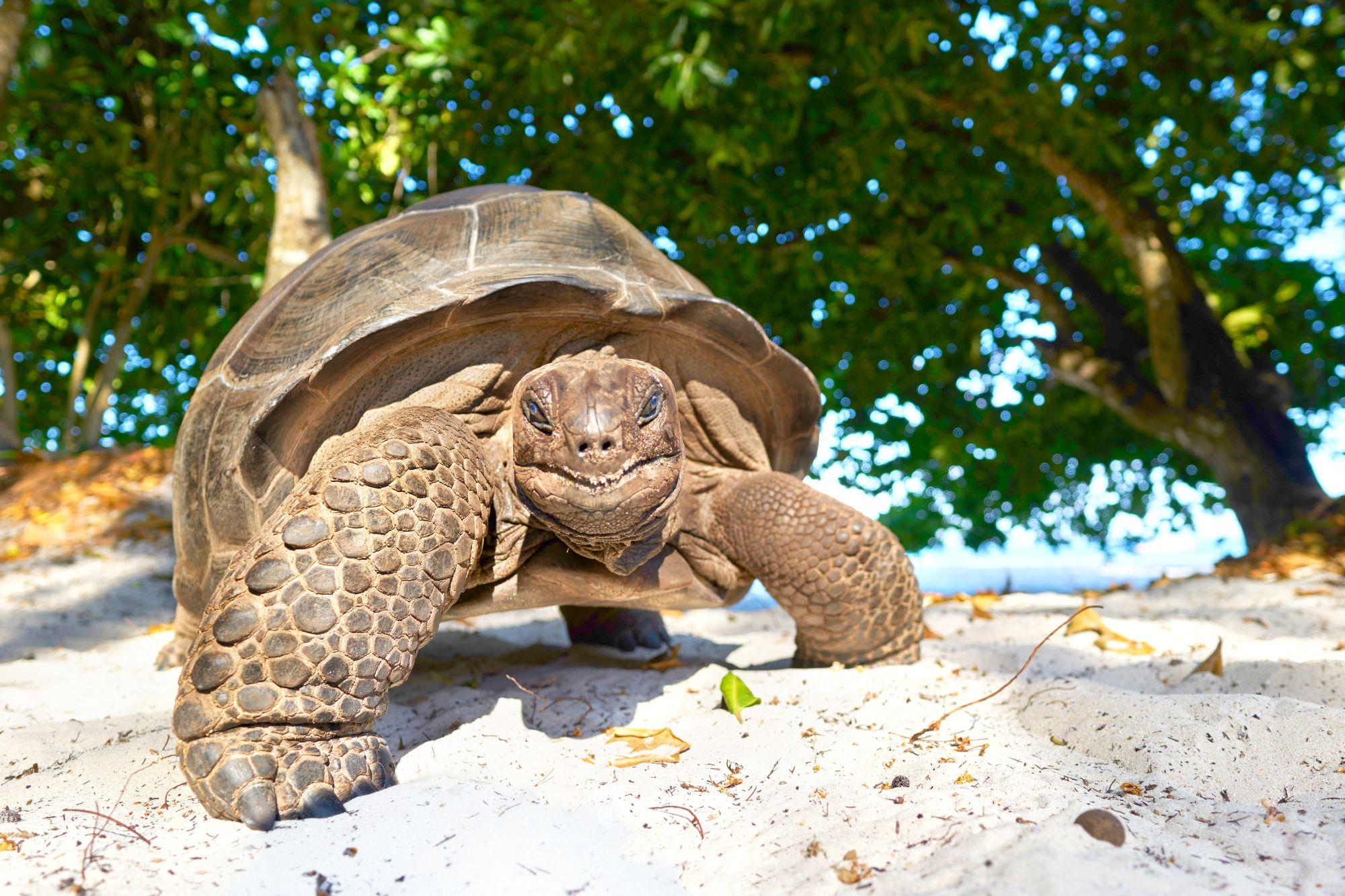 Seszele żółw na plaży