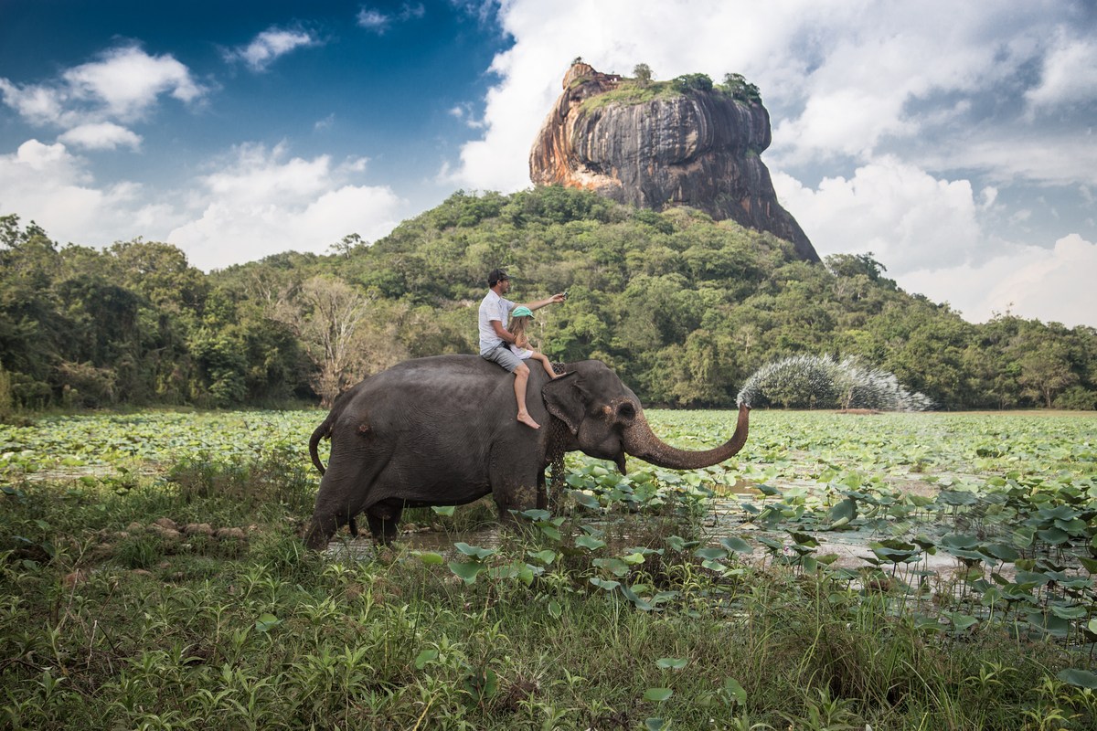 słoń na Sri Lance
