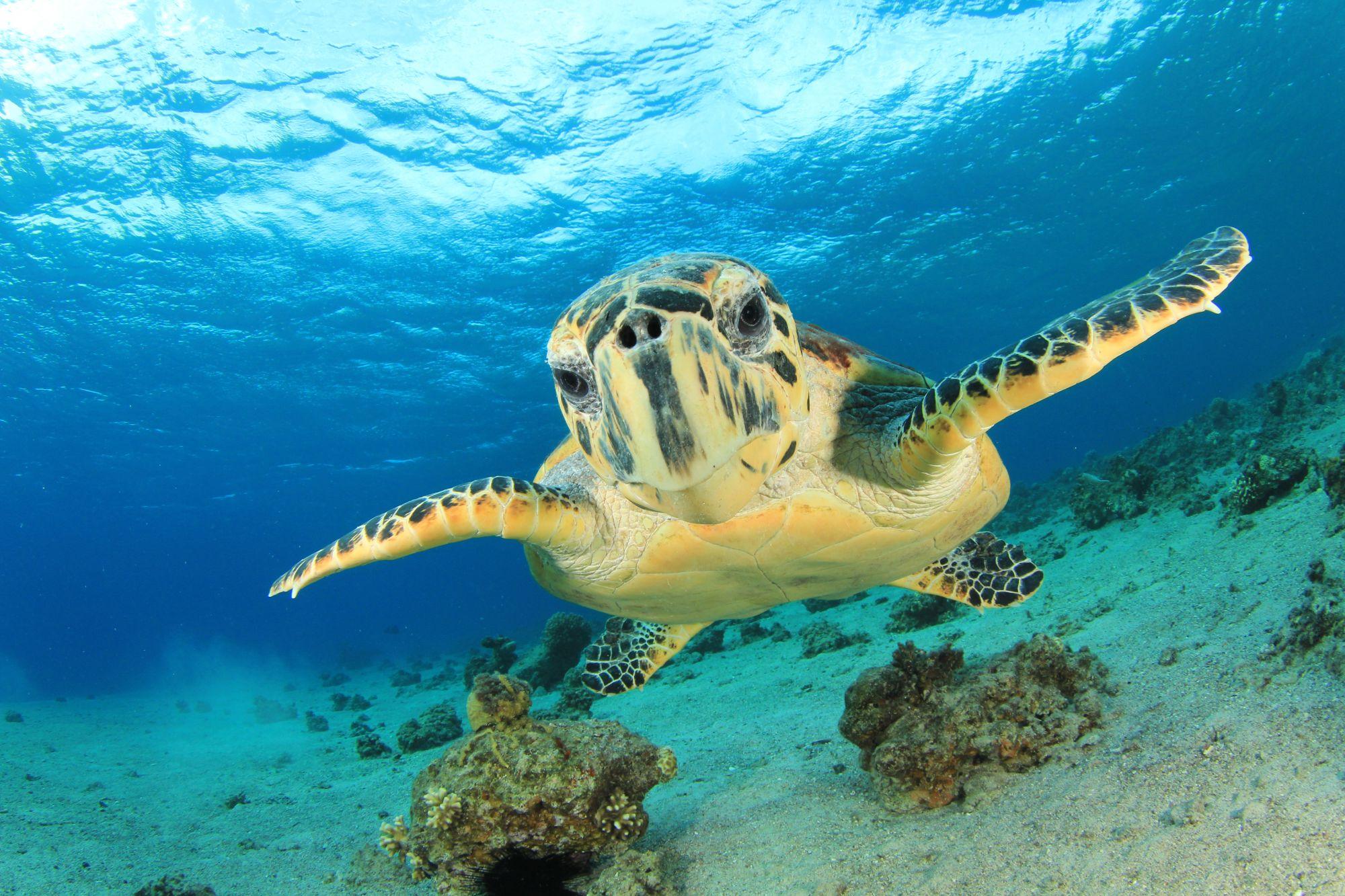 Żółw pływający w morzu