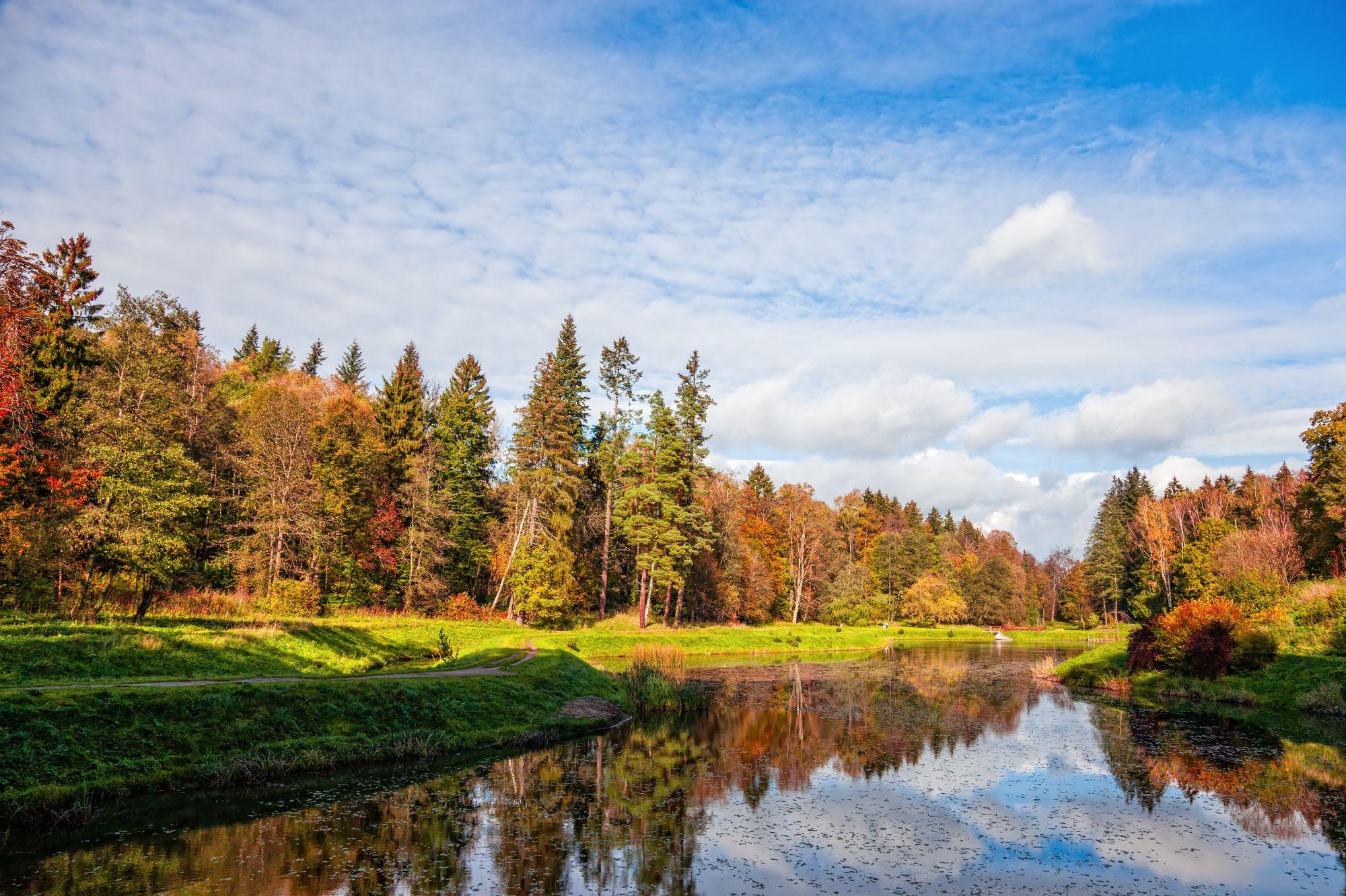Widok lasu i rzeki
