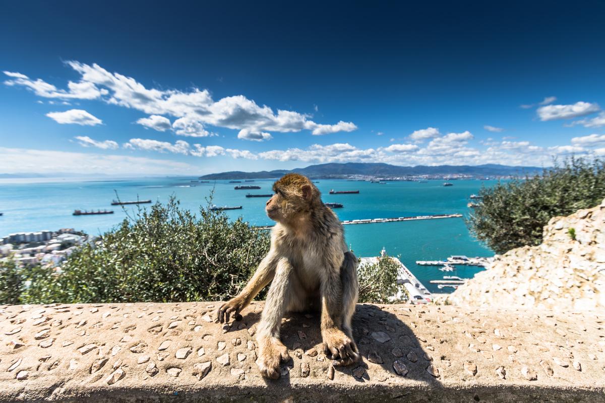 małpka na skarpie