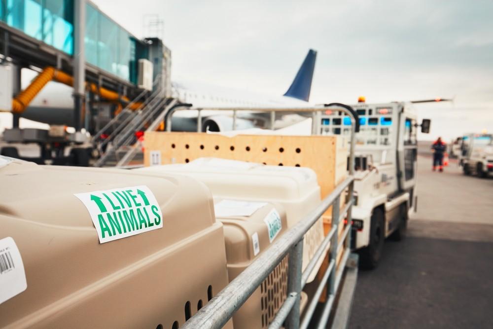 Przewóz zwierząt drogą lotniczą