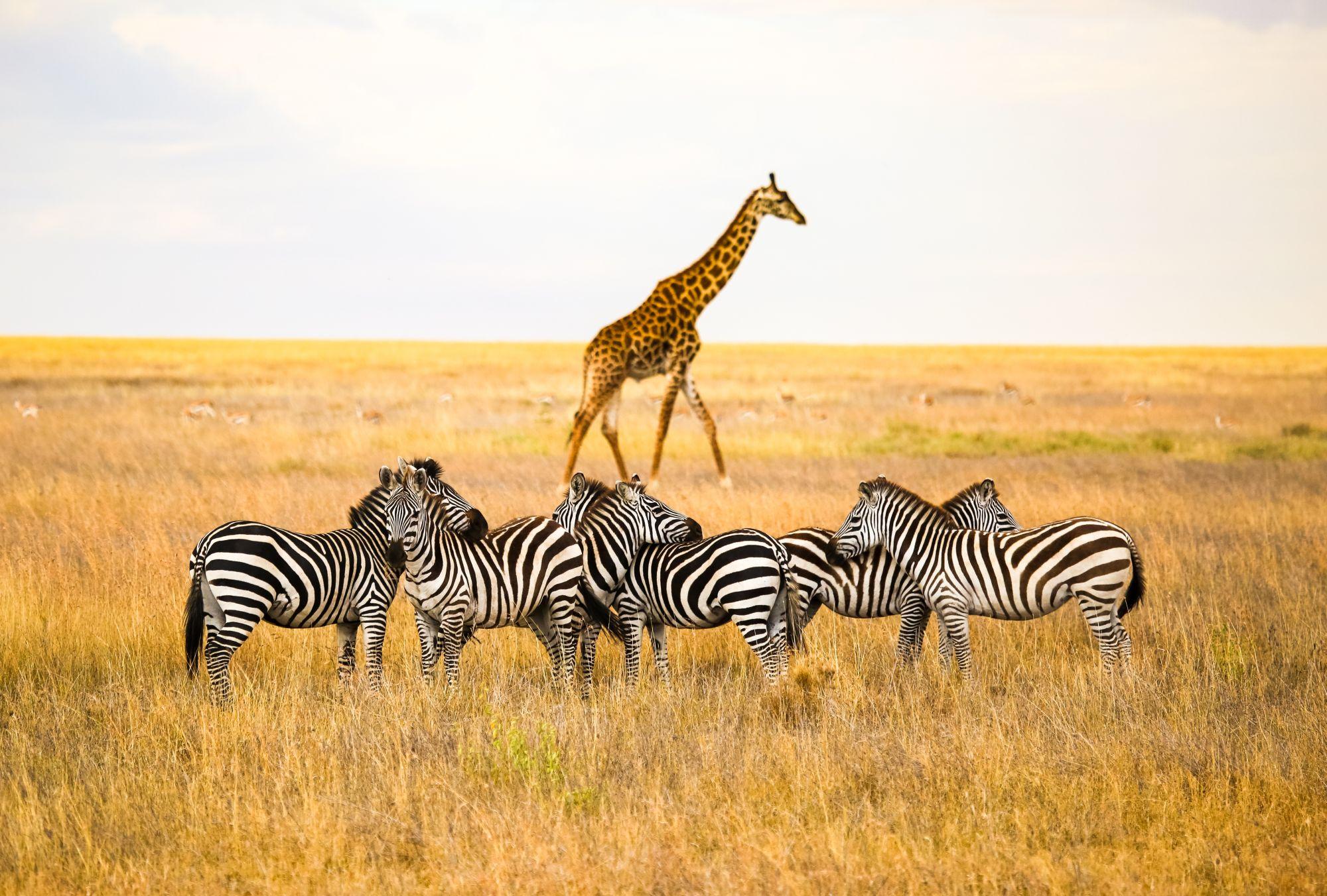 Zwierzęta w Tanzanii
