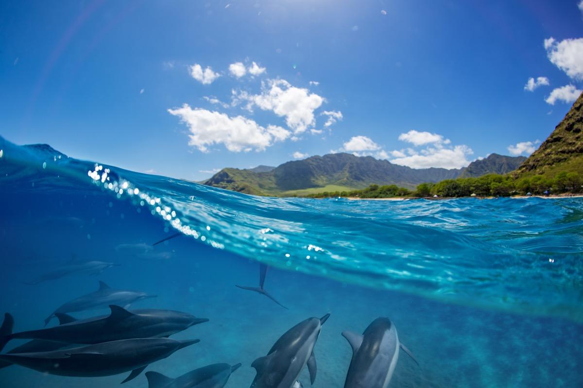 reunion wybrzeze i delfiny