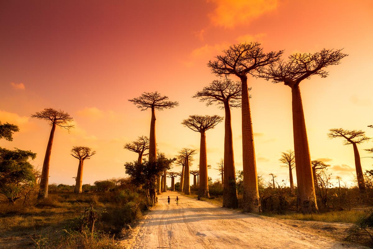 baobaby przy drodze