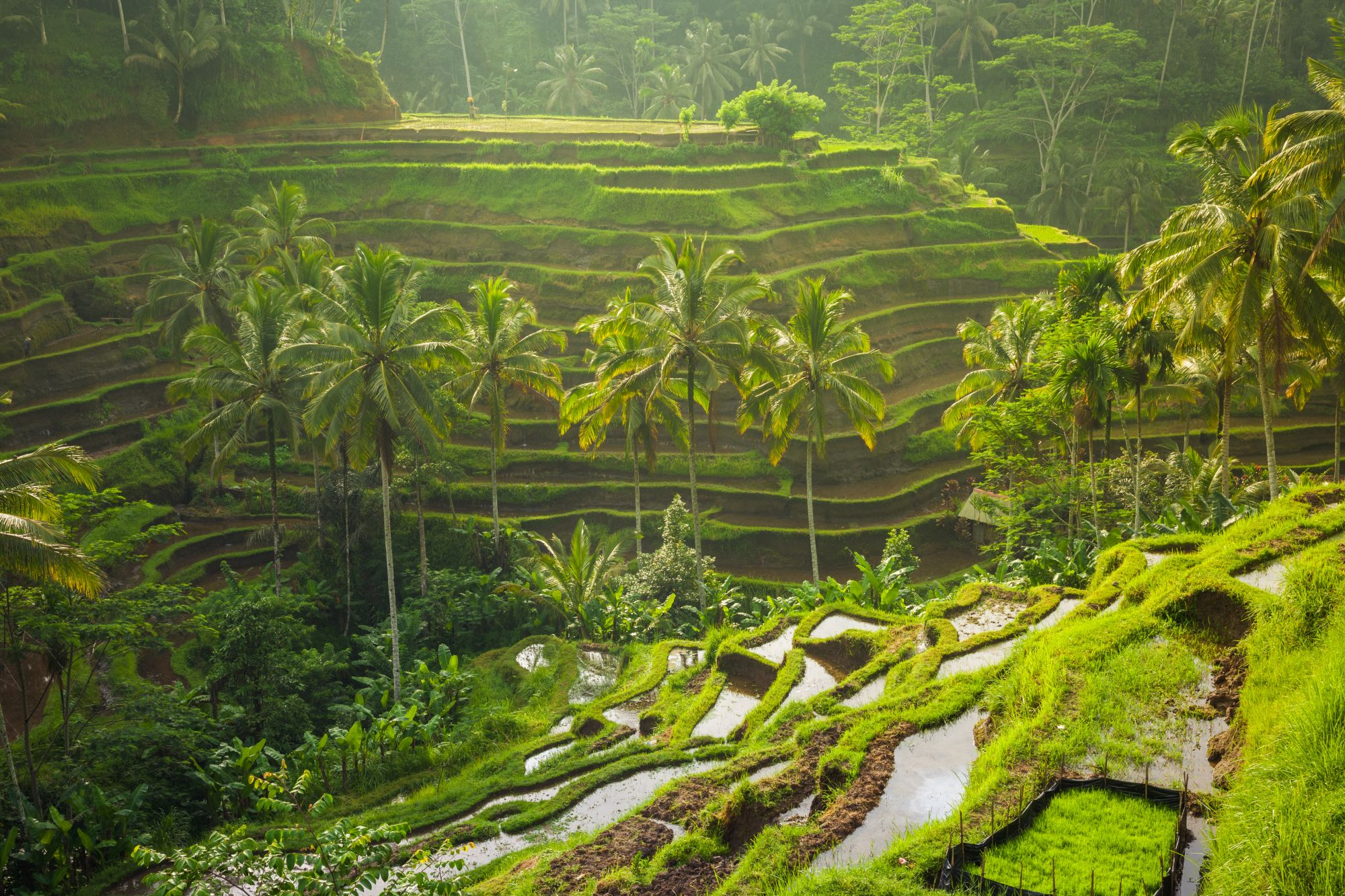 Tarasy ryżowe