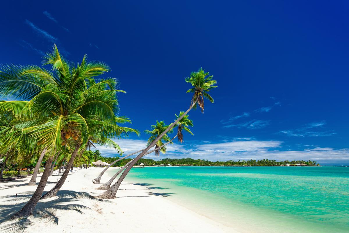 Fidżi plaża i palmy