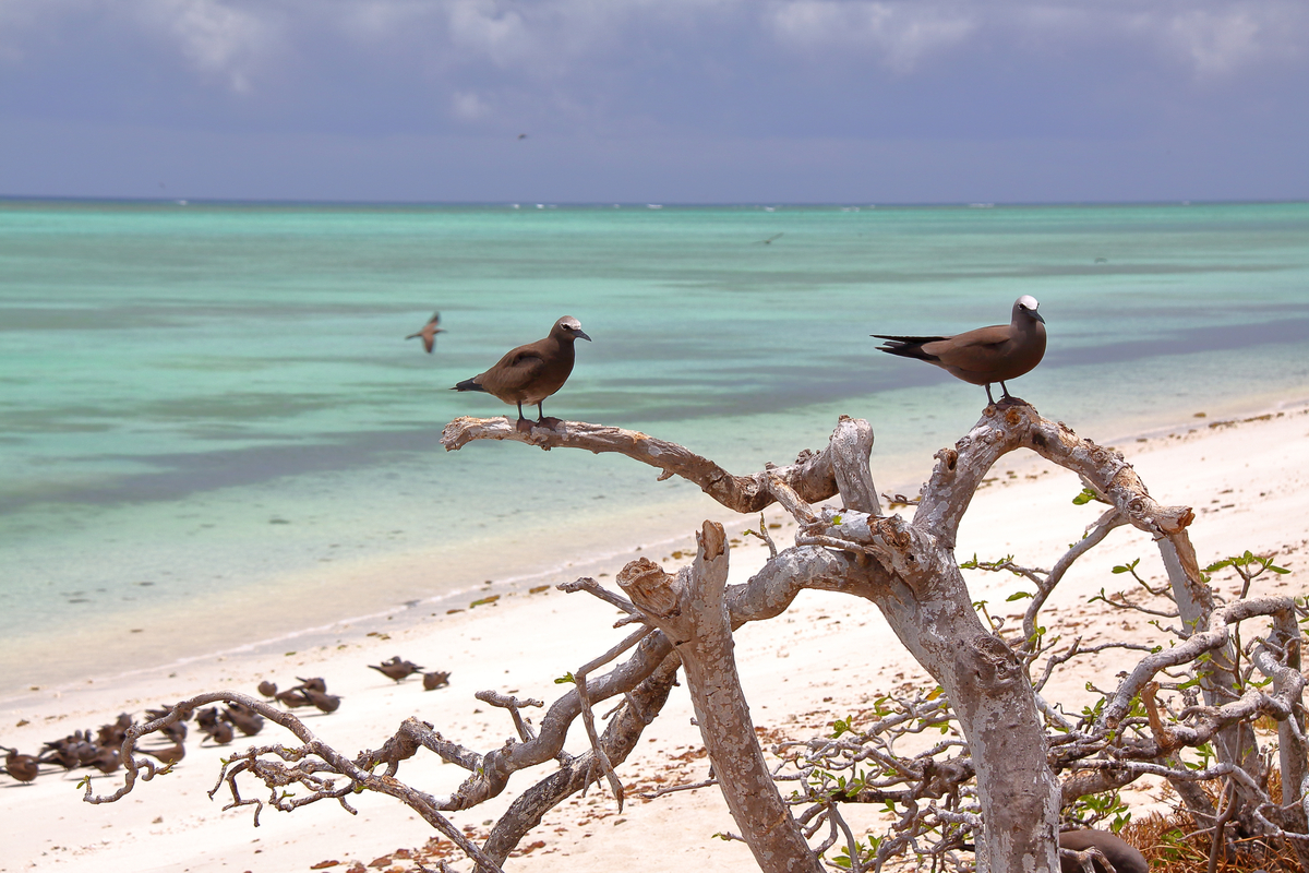 plaża na Rodrigues