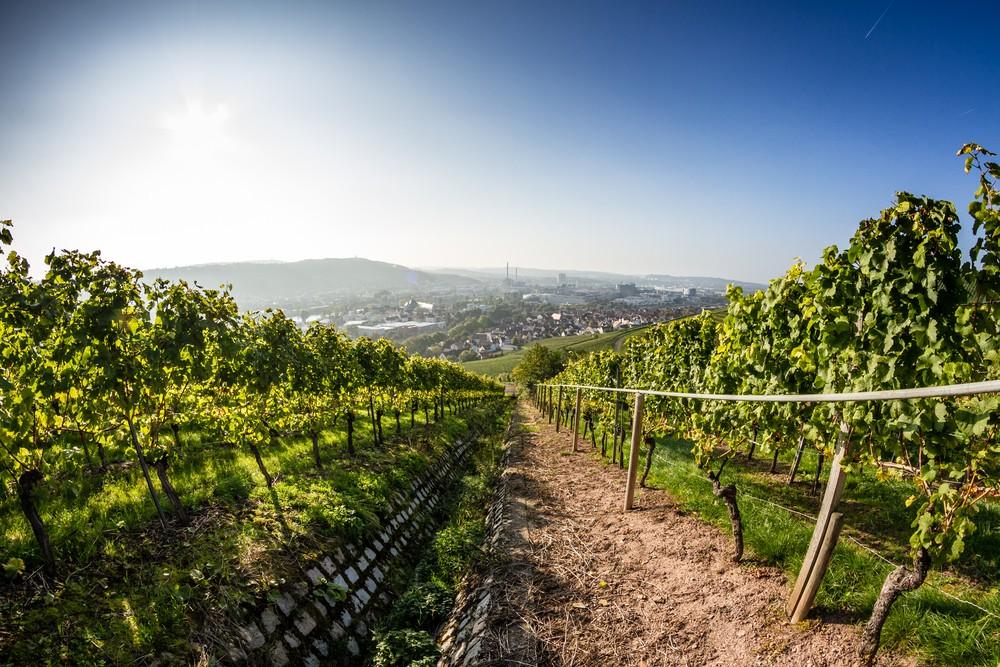 Winnica niedaleko Stuttgartu