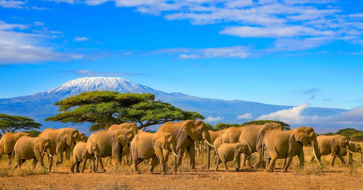 kilimandaro gora kenia