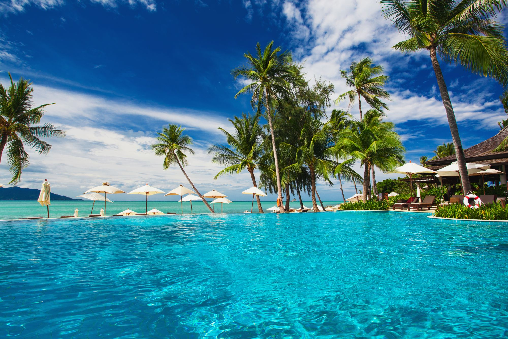 Palmy nad basenem