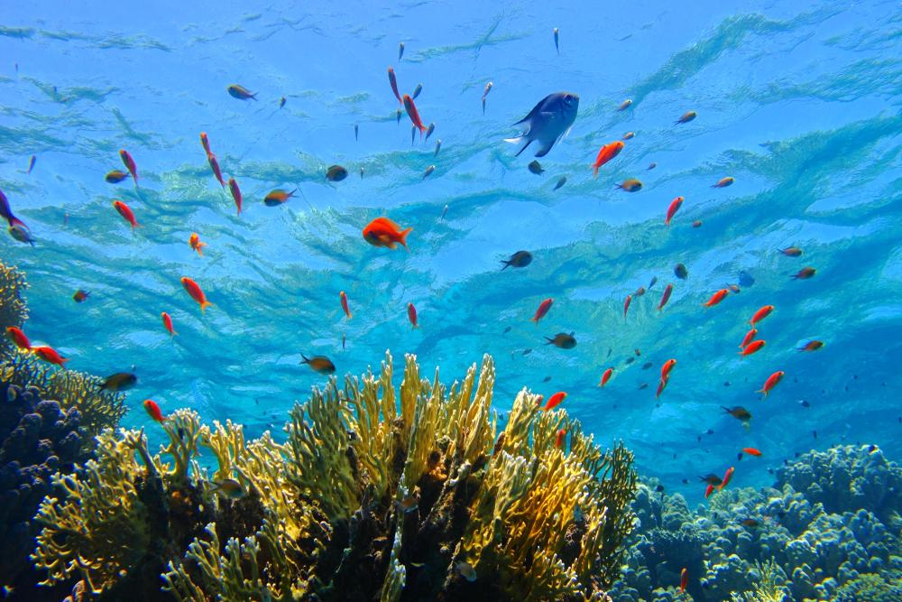 Morze Czerwone