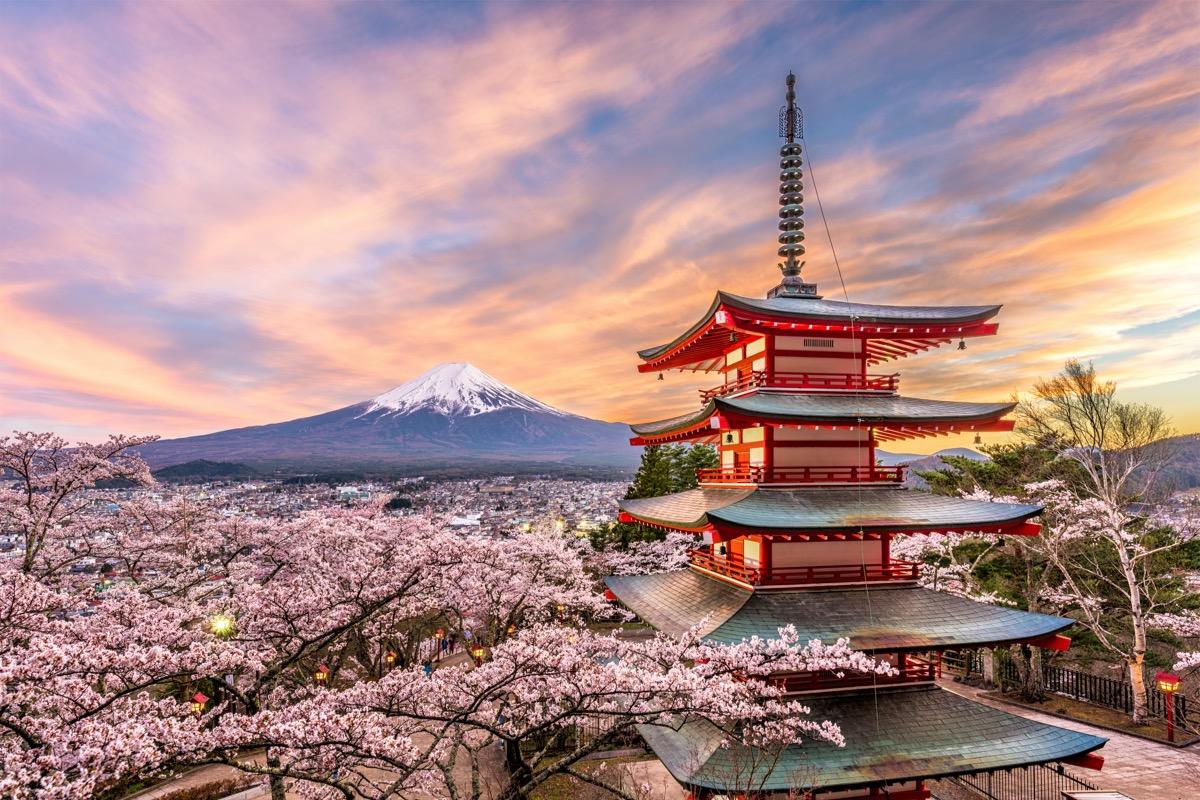 kioto hanami