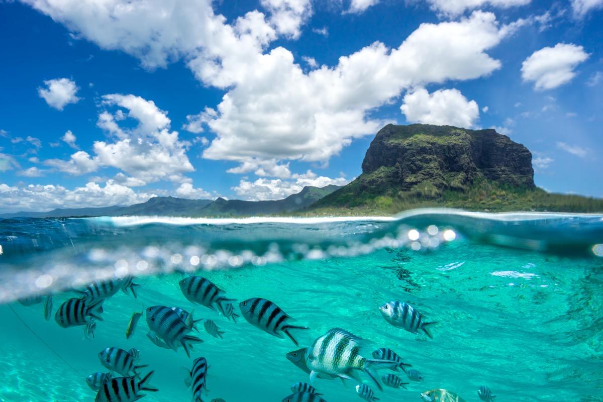 mauriius ryby