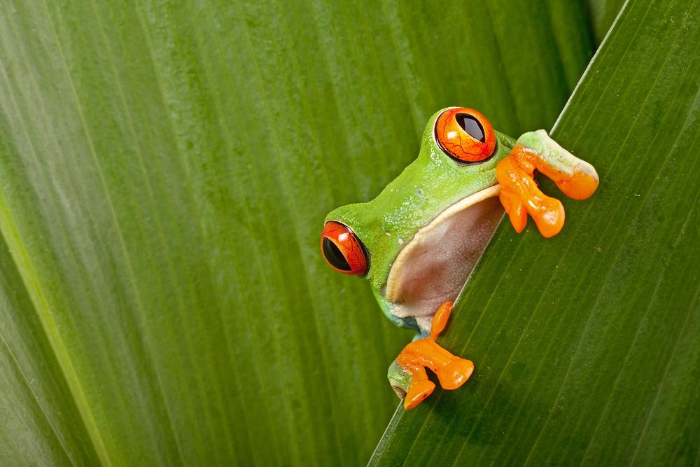 Kostaryka foto 1