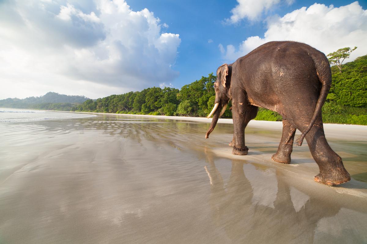 Plaża na Andamanach