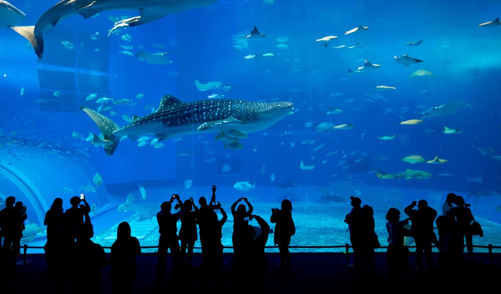 akwarium w Okinawie