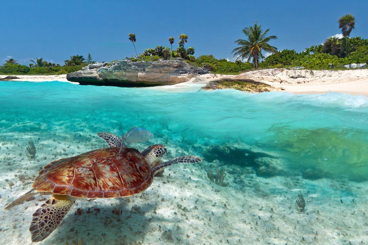 cancun żółw