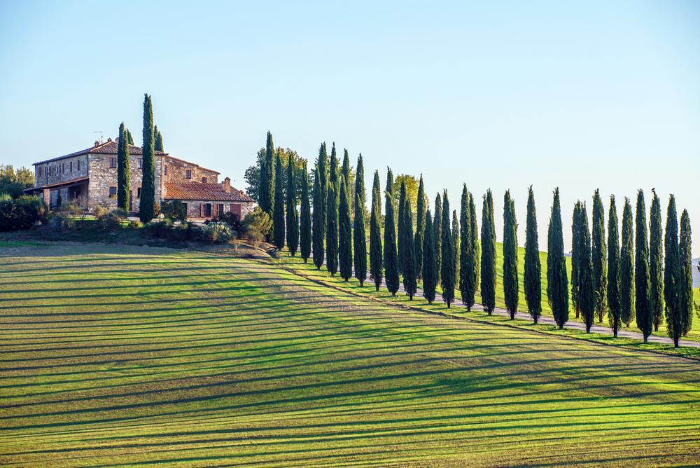 Drzewa w Toskanii