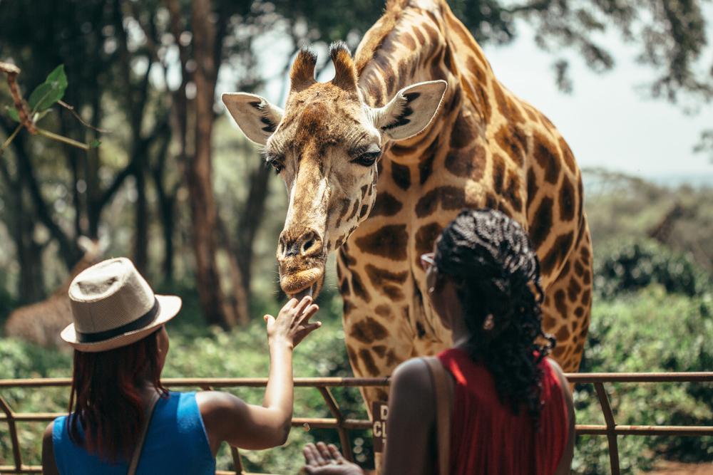 Ludzie i żyrafa