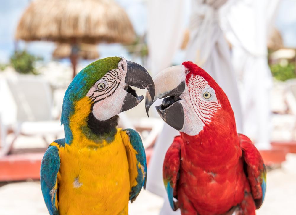 Papugi na plaży