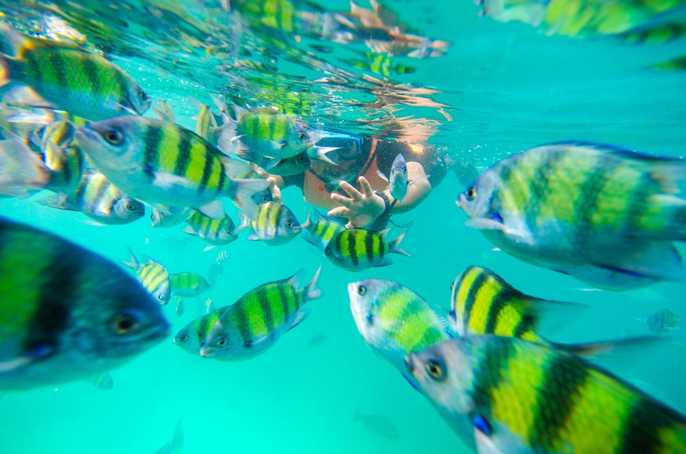 Snorkeling z rybkami