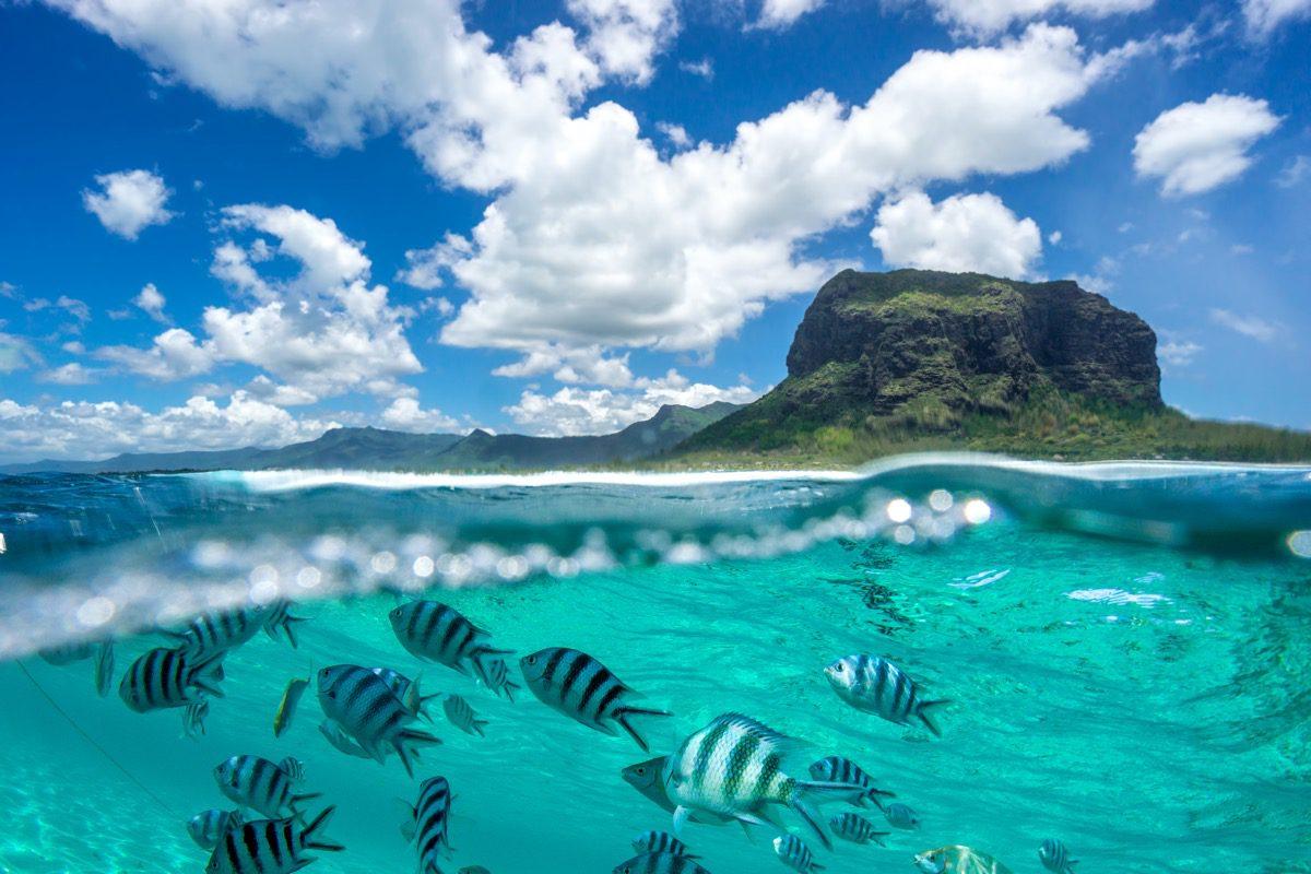 mauritius ryby
