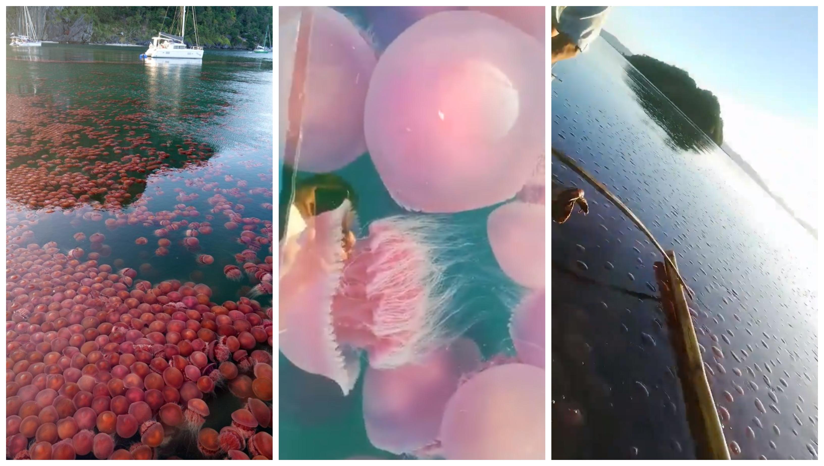 meduzy palawan