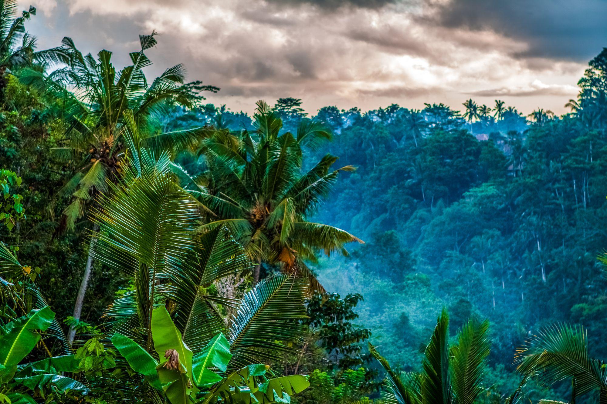 Palmy na Bali