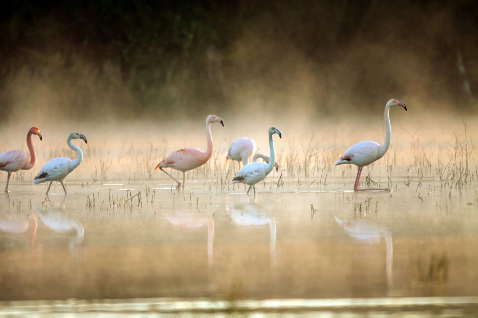 Flamingi nad jeziorem