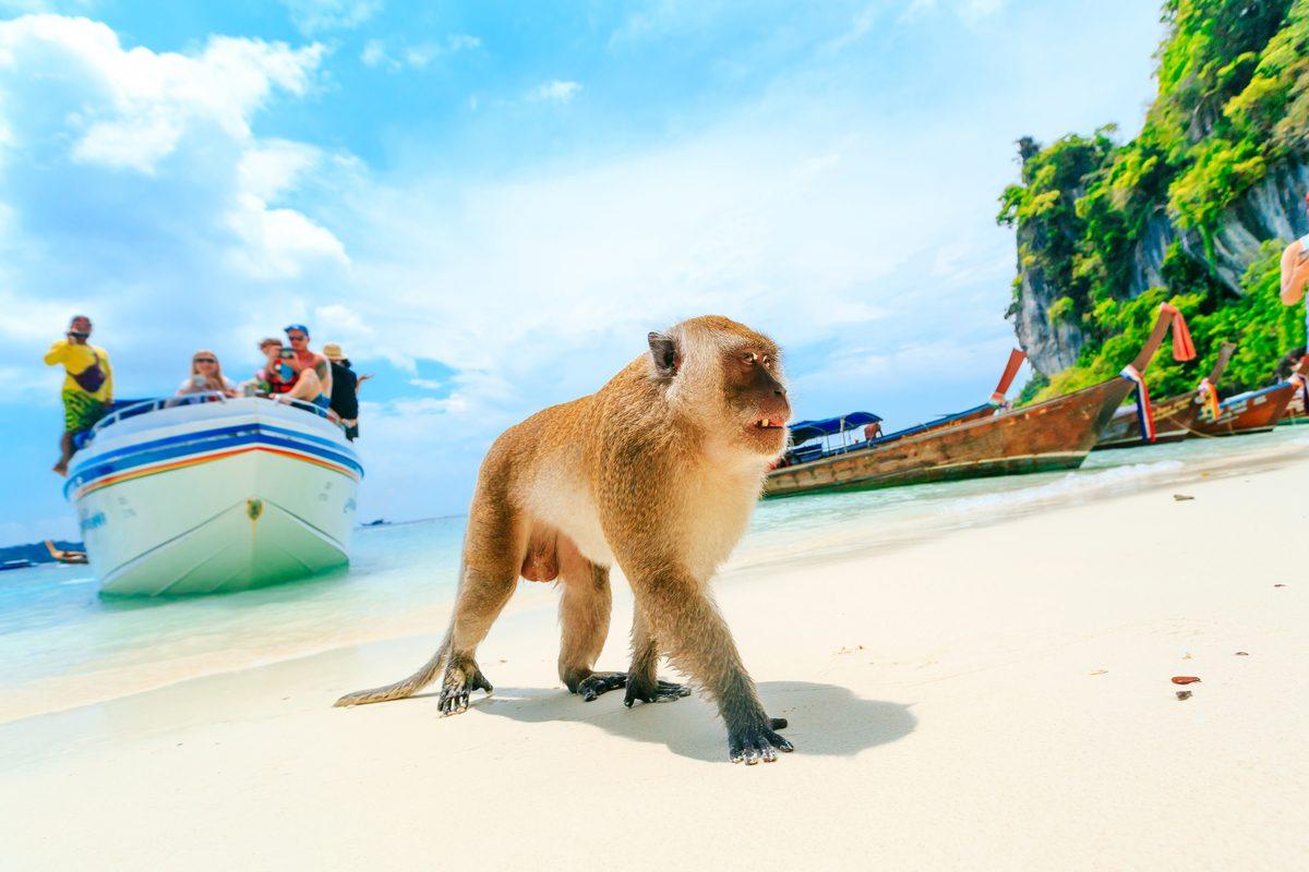 malpa na plazy