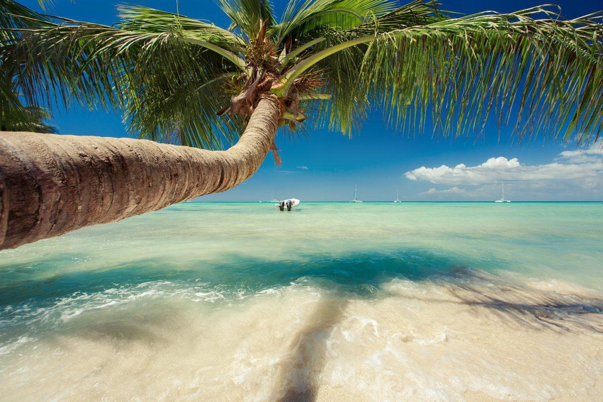 palma w dominikanie